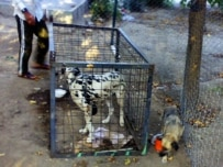 Dogs are taken from their owners and kept at a detention center (Courtesy Photo)