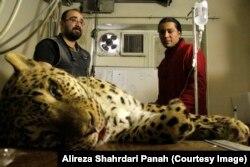 سازمان حفاظت از محیط زیست ایران در گزارش خود میگوید «اگرچه بسیاری از گونههای در معرض خطر تحت حمایت هستند اما متاسفانه ابزار و امکانات کافی برای حفاظت از آنها وجود ندارد