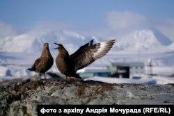 «Сусіди» полярників