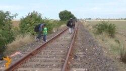Migrantët sfidojnë gardhin hungarez