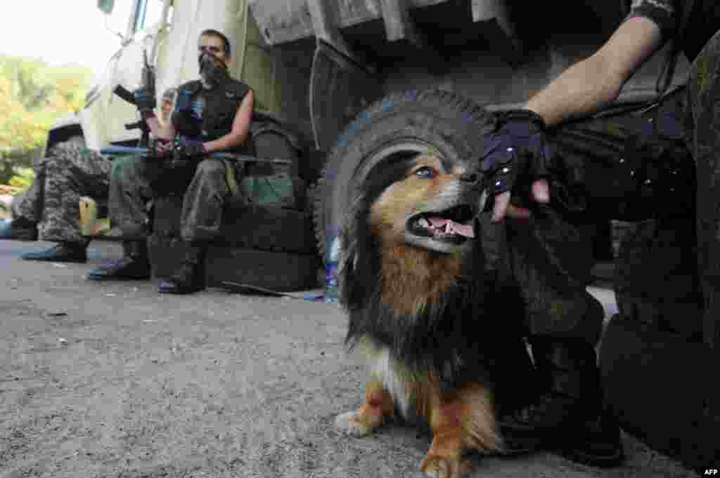 A pro-Russian militant pets a dog while guarding a checkpoint in the eastern Ukrainian city of Slovyansk in June 2014.