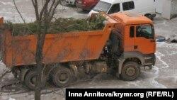 Севастополь, сбор елок для утилизации