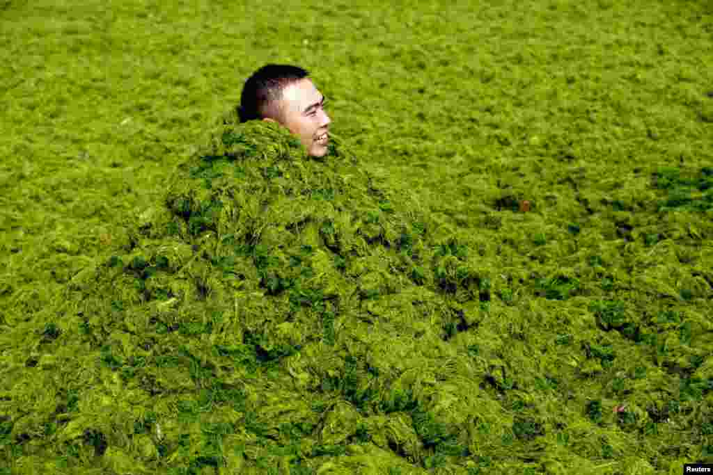 A man covers himself in algae as he plays with his friends at the seaside in Qingdao, China. (Reuters)