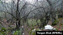 Старый кизиловый сад