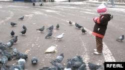 Ребенок кормит голубей. Иллюстративное фото.
