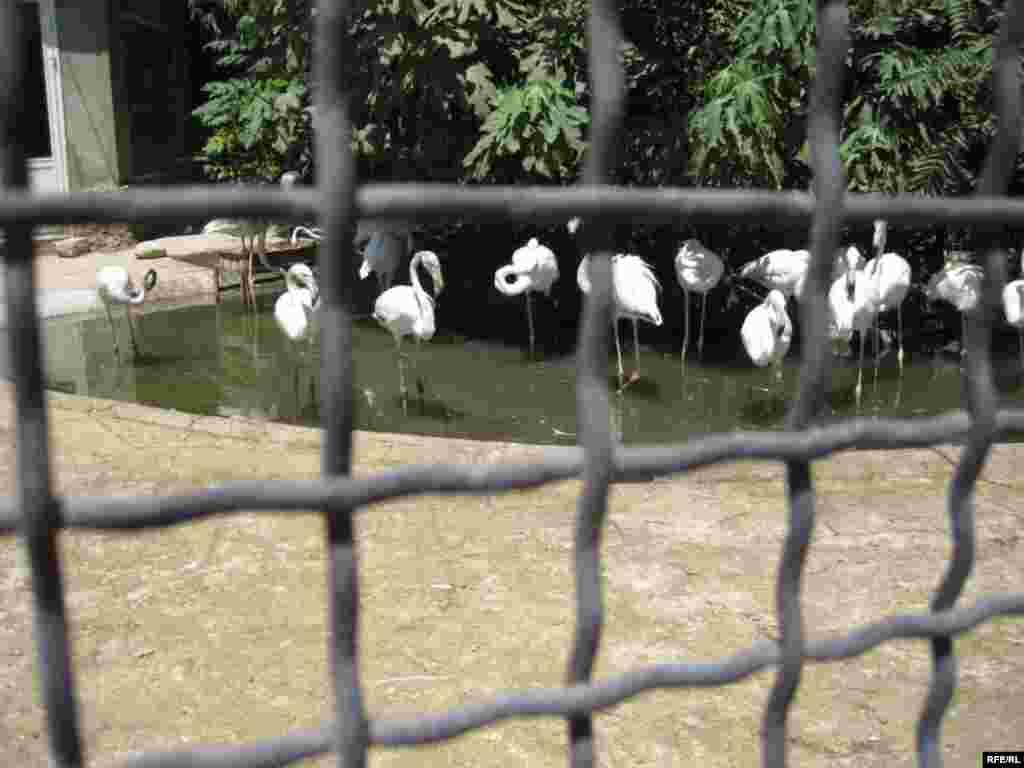 """Zoopark """"əhli"""" və yay istiləri #3"""