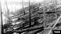 Место падения метеорита. Следы лесного пожара и вывал леса