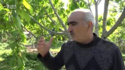 'İqtidar şuşalıların rəy bildirmək haqqını əllərindən alıb'