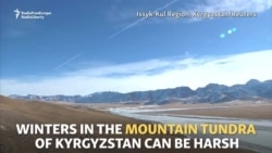 Kyrgyz Yak Herders Prepare For Winter In The Tundra