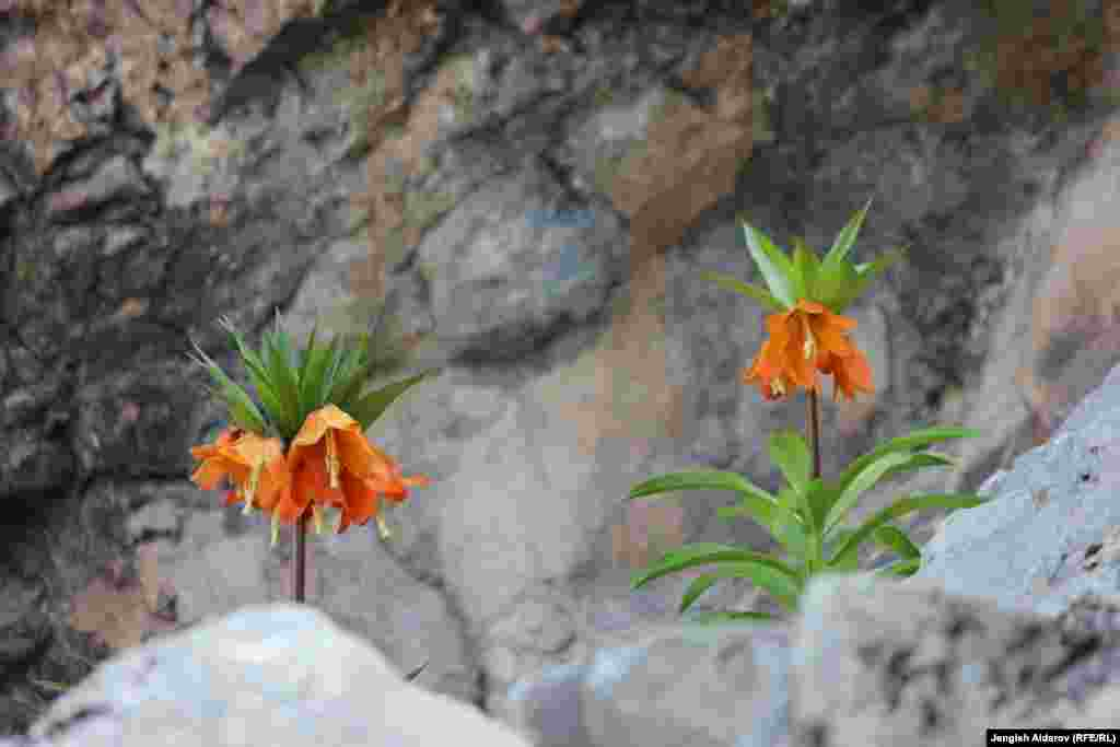 Однако из-за наплыва туристов, есть опасения того, что цветок может исчезнуть.