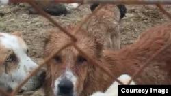 Приемник для бездомных животных, Туркменистан (архивное фото)