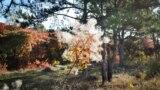 В севастопольские леса приходит осень