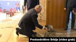 Vladimir Putin sa štenetom šarplaninca koje je dobio na poklon od Vučića