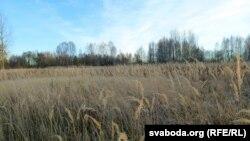 Палі вяскоўцаў зарасьлі травой