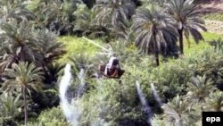 Iraq - A Soviet-era helicopter sprays pesticides over the date palm trees near Najaf in Iraq, 12 May 2006
