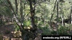 У гэтым лесе мы абедалі