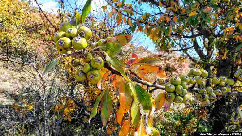 Yılnıñ bu mevsiminde dağ eteginde bir çoq kiyik meyva bar