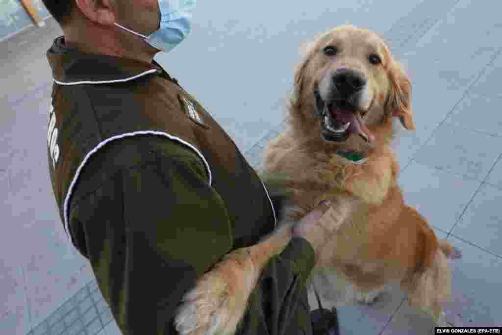 Egy kutyatréner a chilei rendőrségtől bemutatót tart egy sajtómegjelenésen.