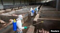 Дезинфекция на свинеферма, засегната от Африканска чума по свинете