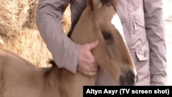 One of the characters is reportedly named after the Turkmen president's favorite horse, Rovach, pictured here as a foal.