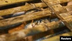 نجات ۱۰۰۰ گربه در راه آشپزخانه