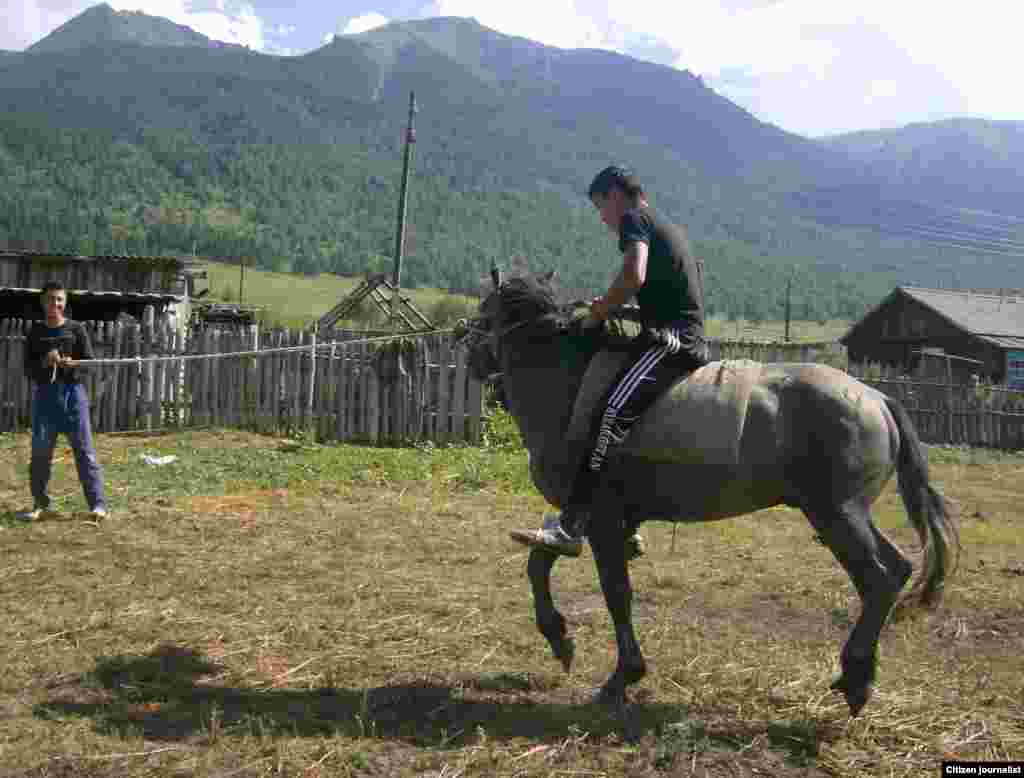 Breaking in an untrained horse, a very traditional Kazakh pursuit.