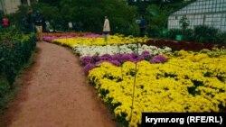 Архивное фото: «Бал хризантем», Никитский ботанический сад, Крым, 2015 год