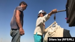 Жинаған мақтасын таразыға тартып тұрған өзбек жігіті. Түркістан облысы, Жетісай ауданы. 2-қазан 2018 жыл