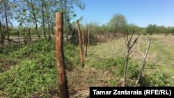 Деревянные колья вблизи грузинского села Хурча появились пару месяцев назад, однако сельчане игнорировали их