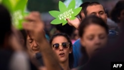 Уругвай - есірткінің бір түрі марихуананы заңдастырған жалғыз ел. (Көрнекі сурет)