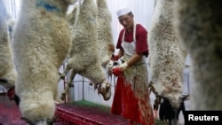 A man works on a sheep carcass at Darkhan Meat Foods that produces halal meat in Darkhan-Uul province, Mongolia, August 13, 2018. Picture taken August 13, 2018. REUTERS/B. Rentsendorj