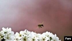 Iran -- Spring blooms of Gorgan, Mar2010