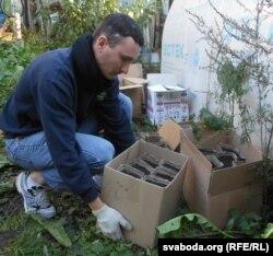 Валянтэр Андрэй Бурдзялоўскі выносіць каробкі з тарфянымі кантэйнэрамі, дзе пасаджаны каштаны ды жалуды