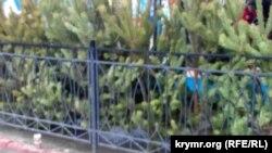 На центральному ринку Керчі торгують ялинками з Пензи по чотириста рублів за метрове дерево