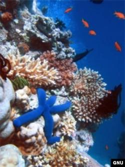 Улуу маржан рифи, Австралия.