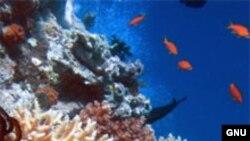 В изоляционной кабине человек лежит на поверхности воды. Отсюда второе название этого устройства – «флоут-кабина» (от английского float – «поплавок»)