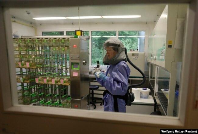 Доктор Дорин Мют из Института бактериологии в Бонне проводит лабораторные испытания