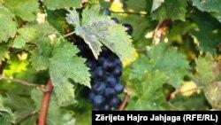 Rrushi në Maqedoni