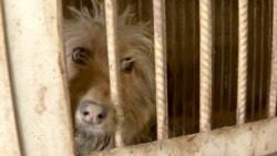 Shot Or Thrown Away: Stray Dogs In Central Asia Face Brutal Treatment