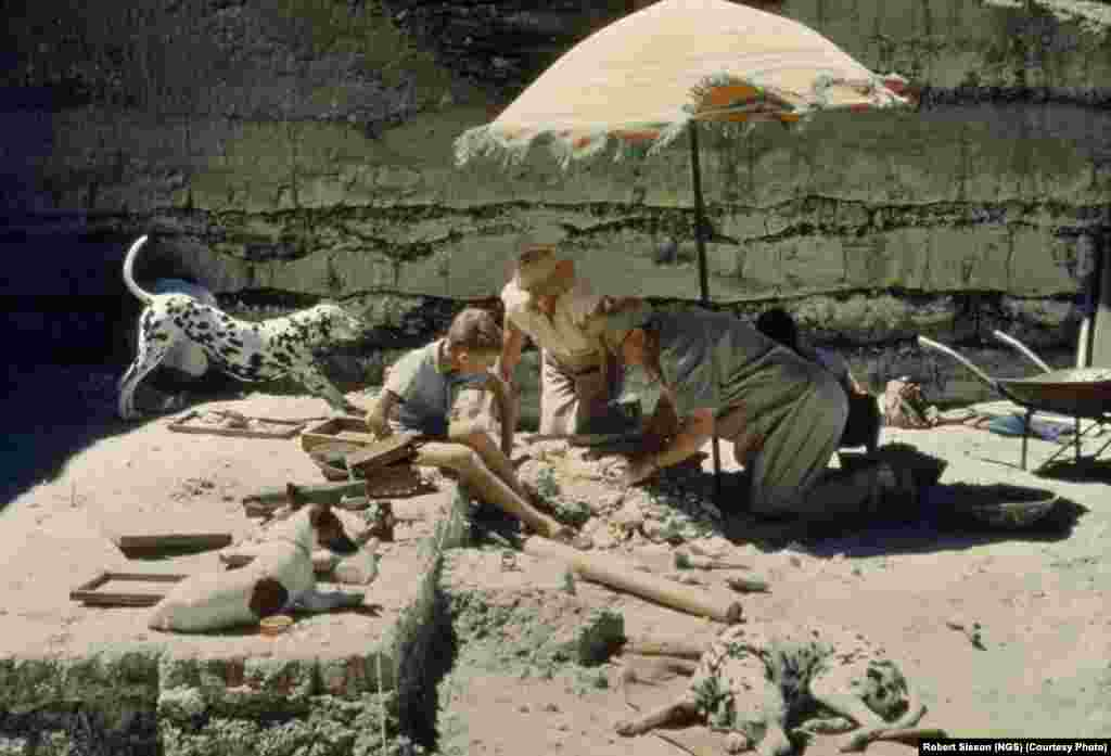 Paleontologist and National Geographic grantee Louis Leakey and his family inspect the campsite of an early hominid at Tanzania's Olduvai Gorge.