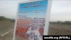Поле с «приклеенным хлопком» находится на территории фермерского хозяйства «Истиклол» в Куштепинском районе Ферганской области.