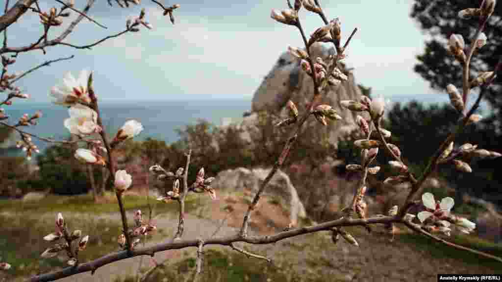Badem ve alıça çeçeklenüv mevsimini aça