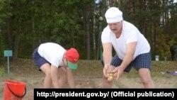 Аляксандар Лукашэнка з сынам Колем зьбіраюць ураджай бульбы ў Драздах. Менск, 16 жніўня 2015 году