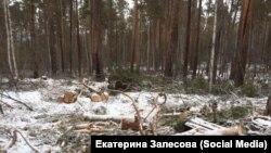 Рубка леса в Приангарье