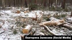 Незаконная рубка леса в Иркутской области, архивное фото