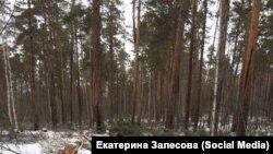 Лес в Приангарье