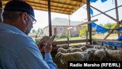 Имам читает молитву. Перед ним – овцы, которые будут зарезаны к празднику Курбан-Байрам