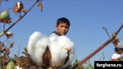 A young Uzbek picks cotton in October 2009.