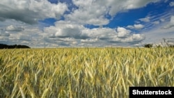 Russia is the world's largest wheat exporter.