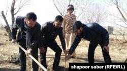 نهال شانی در هرات